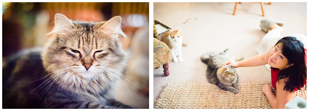Two photos of a furry cat getting some attention