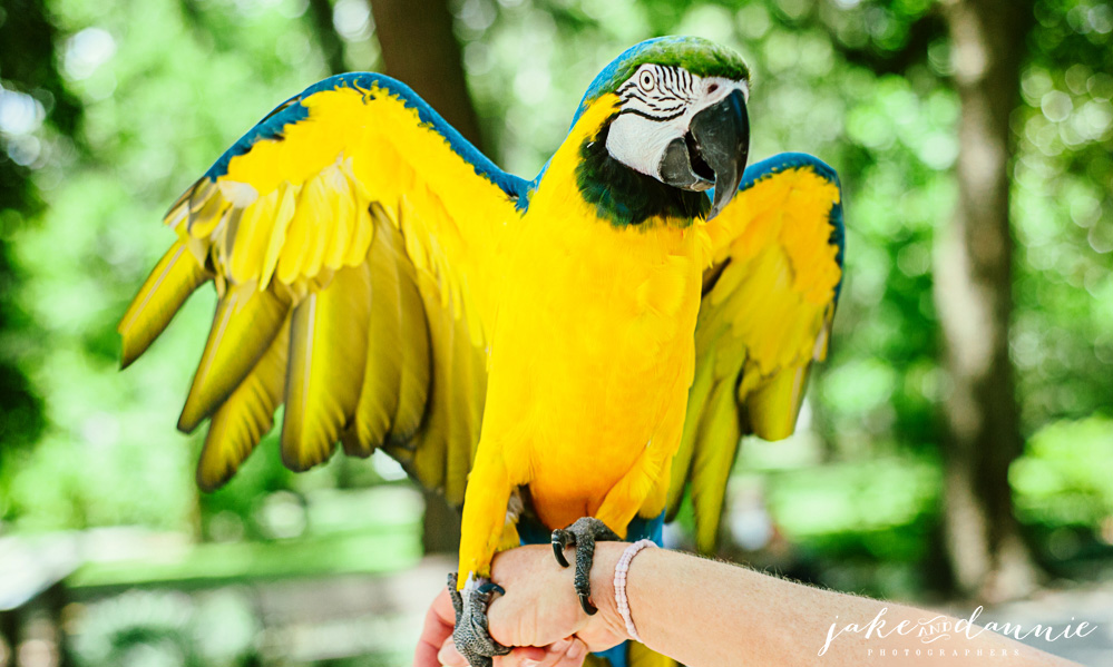 A woman holds a beautiful parrot in Forsyth Park in Savannah Georgia