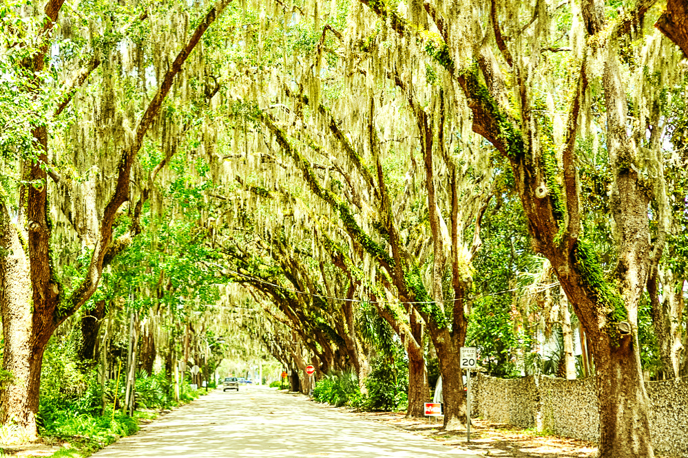 A street lined with live oaks in St. Augustine Florida